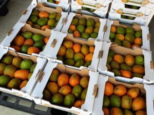 Mangues fraiches Made in Burkina Faso, premier choix et Premiere Qualite